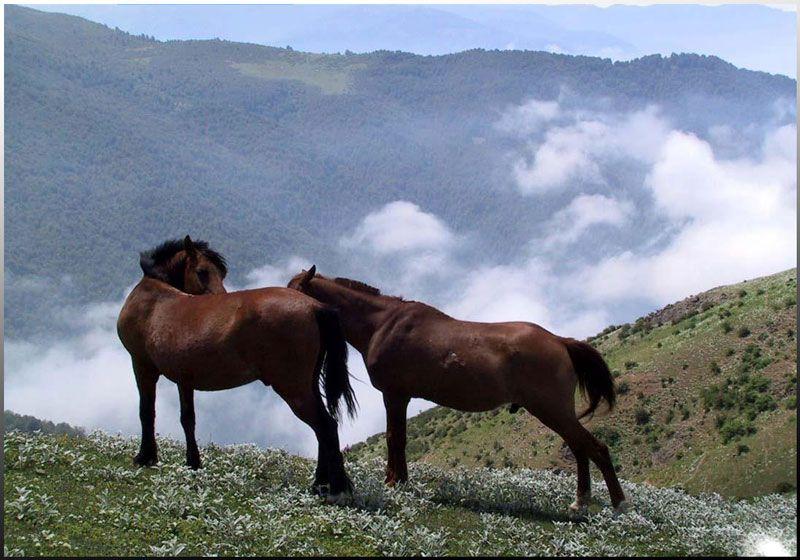 چرای اسبها در ییلاق سوباتان