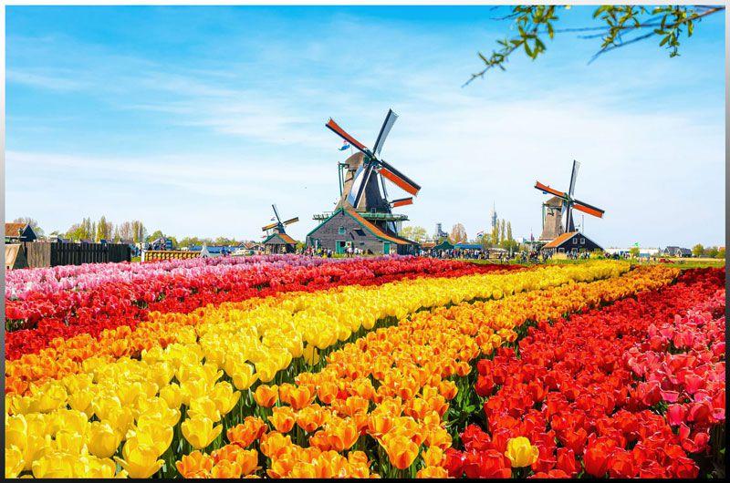 زیباییهای هلند