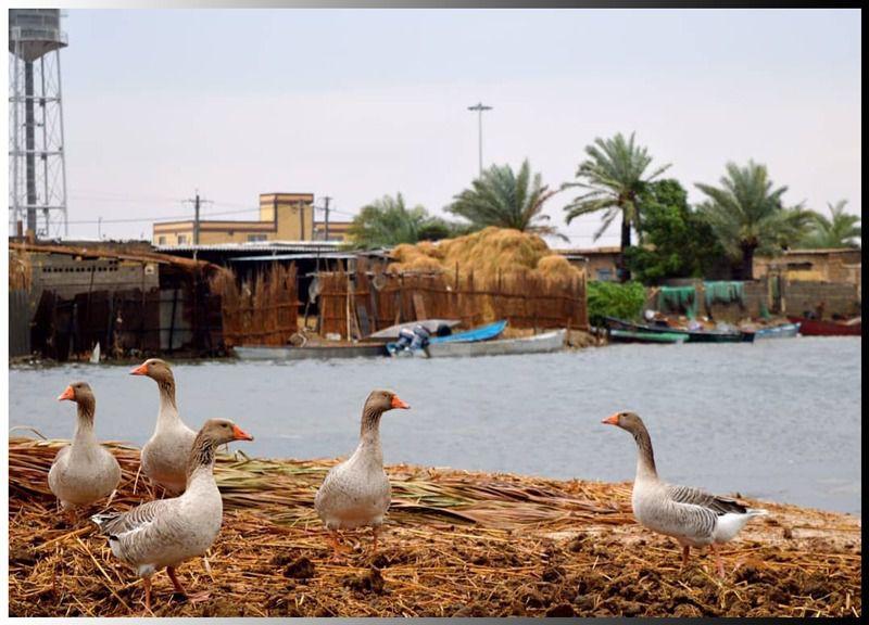 پرندگان روستای سراخیه